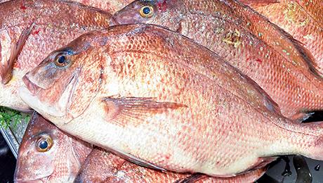 だからこんなに大きくてキレイな鯛がお店に並ぶんだね!ぴちぴちして新鮮で美味しそうだっキー!