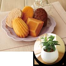 【母の日】コーヒー豆の木&神戸「ファクトリーシン」焼菓子詰合せ